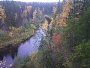 №9 «Есть у нас много лесов прекрасных, Леса северные, они очень дорогие»