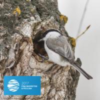 1 апреля отмечается экологический праздник «Международный день птиц»
