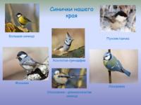 Невелика птичка-синичка, но и та свой праздник помнит